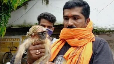 Photo of Humanity Exists: Balasore Man Rushes 15 Km To Save Injured Monkey