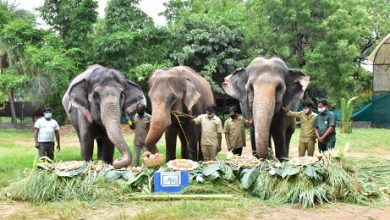 Photo of Special Celebrations For Elephants At Hyd Zoo Including 82-Yr-Old Rani