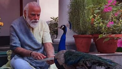 Photo of Watch Prime Minister Narendra Modi Engrossed In Feeding Peacock