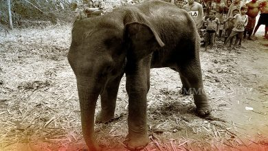 Photo of Rescued Elephant Calf Succumbs To Cold In Odisha's Mayurbhanj