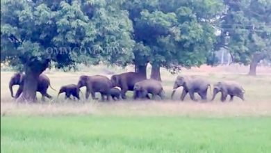 Photo of Two Elephant Herds Give Sleepless Nights To Sundargarh Residents