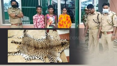 Photo of Leopard Head & Hide With Boar Meat Seized In Nuapada, 3 Arrested