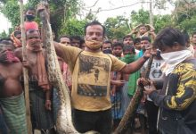 Photo of 12-Feet-Long Python Rescued At Puri's Chandanpur