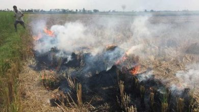 Photo of New Law In 3/4 Days To Address Pollution From Stubble Burning: Govt