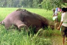 Photo of Yet Another Elephant Carcass Found In Odisha's Paddy Field