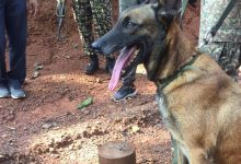 Photo of ITBP Dog 'Sophia' Foils IED Blast In Chhattisgarh, Saves Lives