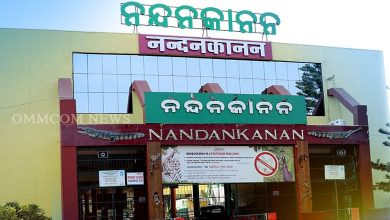 Photo of Nandankanan Zoo To Reopen From Oct 4