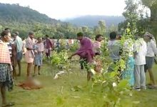 Photo of Angul: Farmer Killed In Elephant Attack