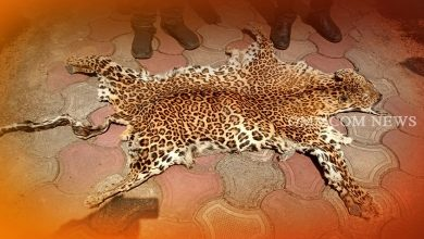 Photo of Leopard Skin Seized, 5 Poachers Arrested In Mayurbhanj