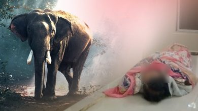 Photo of Elephant Kills Elderly Woman In Dhenkanal