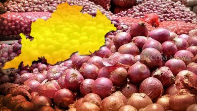 Photo of Food Supplies Dept Alerts Collectors As Onion Prices Surge