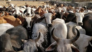 Photo of Cow Dung Becomes A Means Of Employment In UP