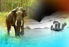 Photo of Man Killed In Elephant Attack In Dhenkanal