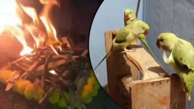 Photo of Pet Parrot's Death: Mortal Remains Consigned To Flames, Ex-Army Man's Family In Grief