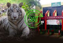 Photo of Nandankanan Zoo Offers Virtual Tour Amid Pandemic