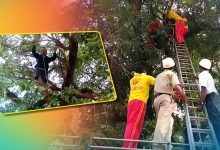 Photo of Inebriated Man Threatens To Commit Suicide From Treetop In Rourkela, Rescued