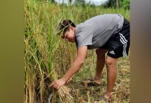 Photo of India Football Forward Anju Enjoys Working In Agriculture Field