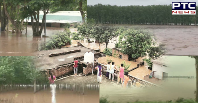 Jalandhar: Flood-like situation in 7 villages of Phillaur following heavy rainfall, see photos