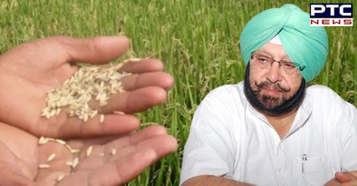 Captain Amarinder Singh hails Punjab's selection for 'Krishi Karman Award' as Best performing state in rice production
