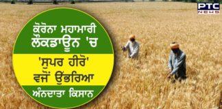 COVID -19 Indian farmers