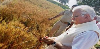Opposition parties are making unnecessary issues in purchasing of wheat and mustard says CM Khattar