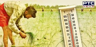 IMD Weather Prediction in Punjab   Heatwave Temperature in the State