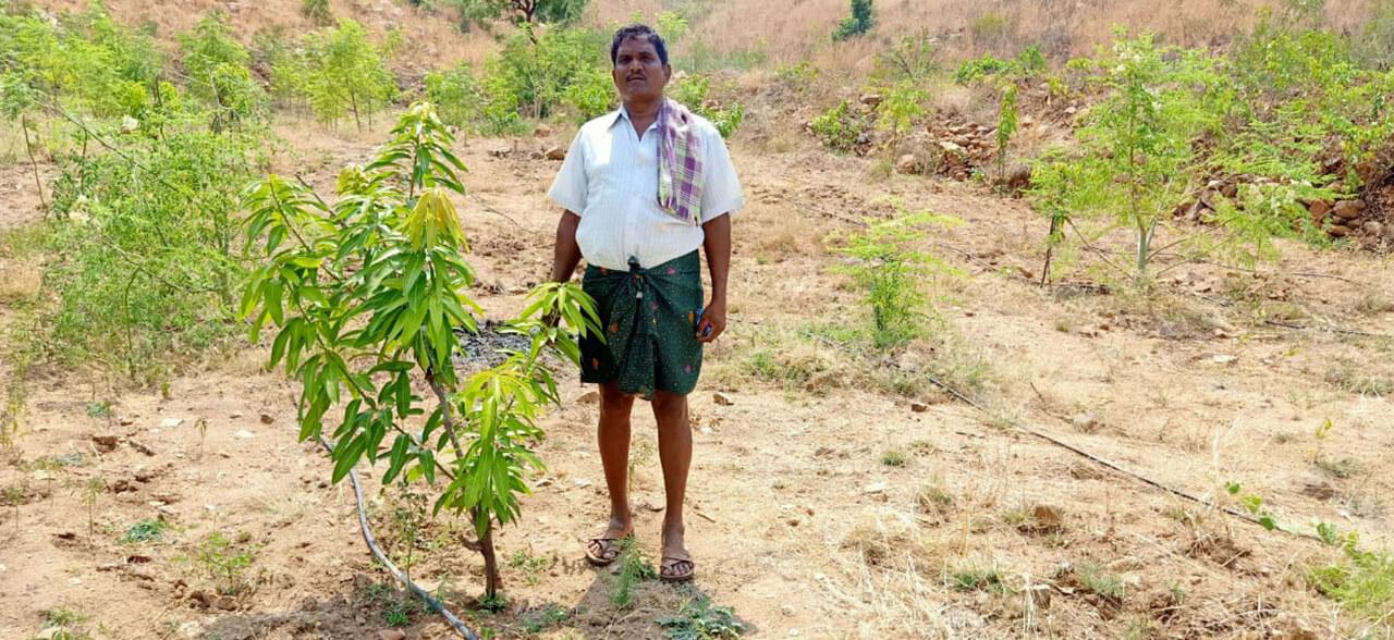Green-Deccan-3