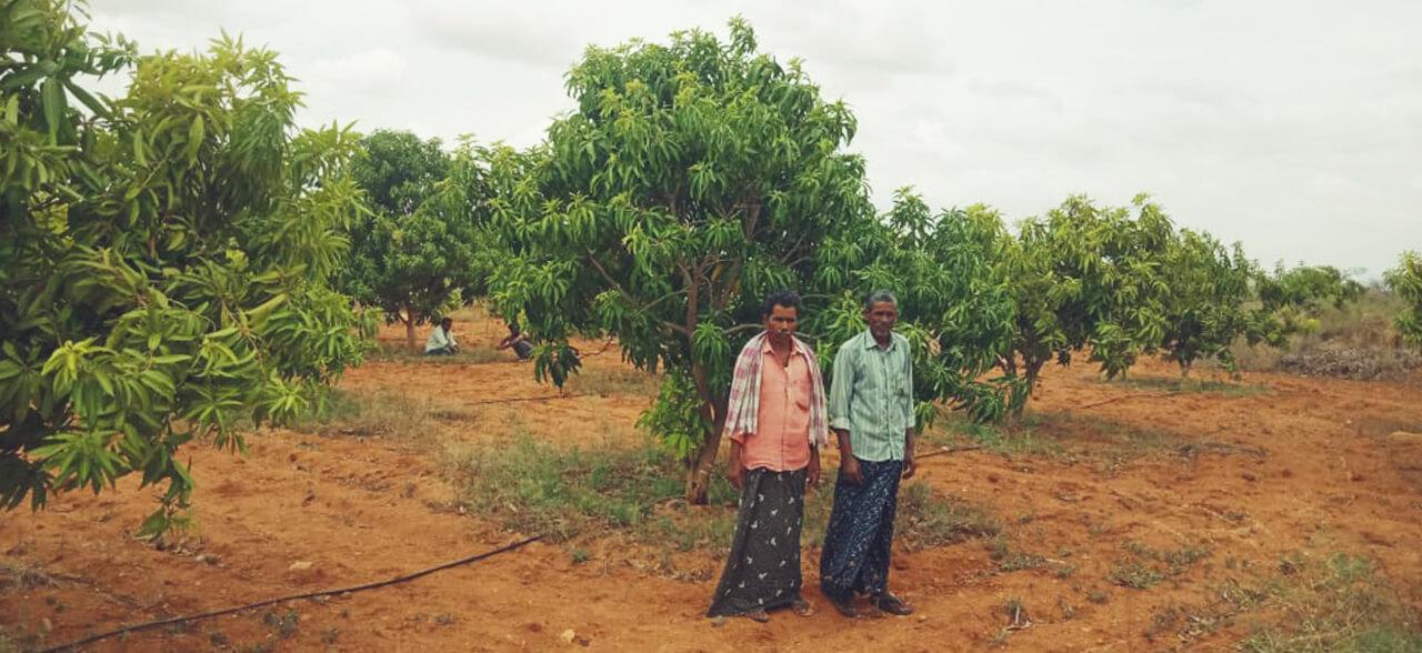 Green-Deccan-4