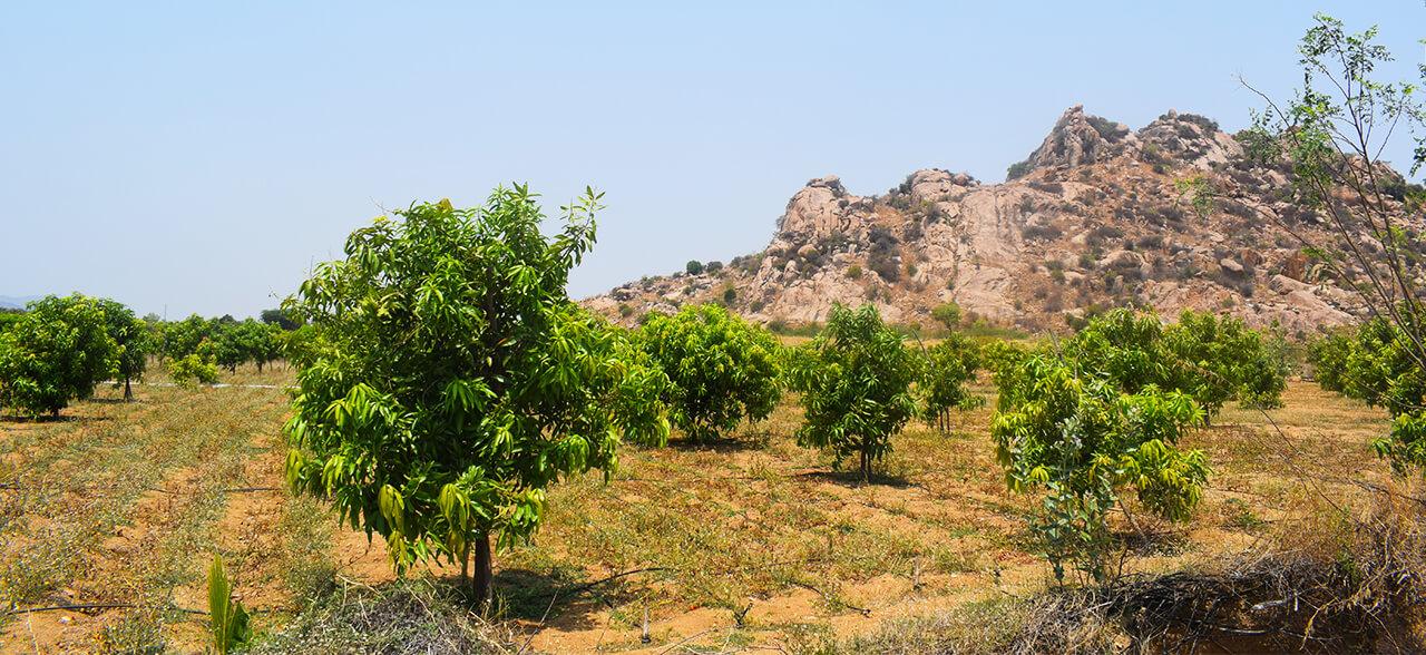 Green-Deccan-5