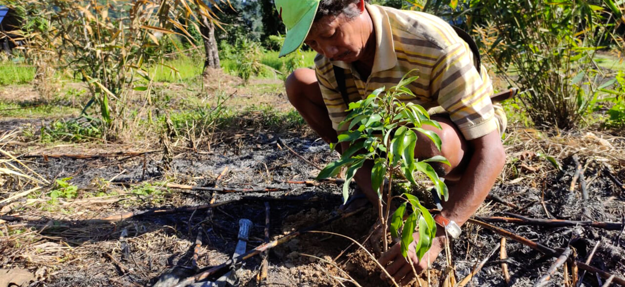 Intercropping and Drip Irrigation
