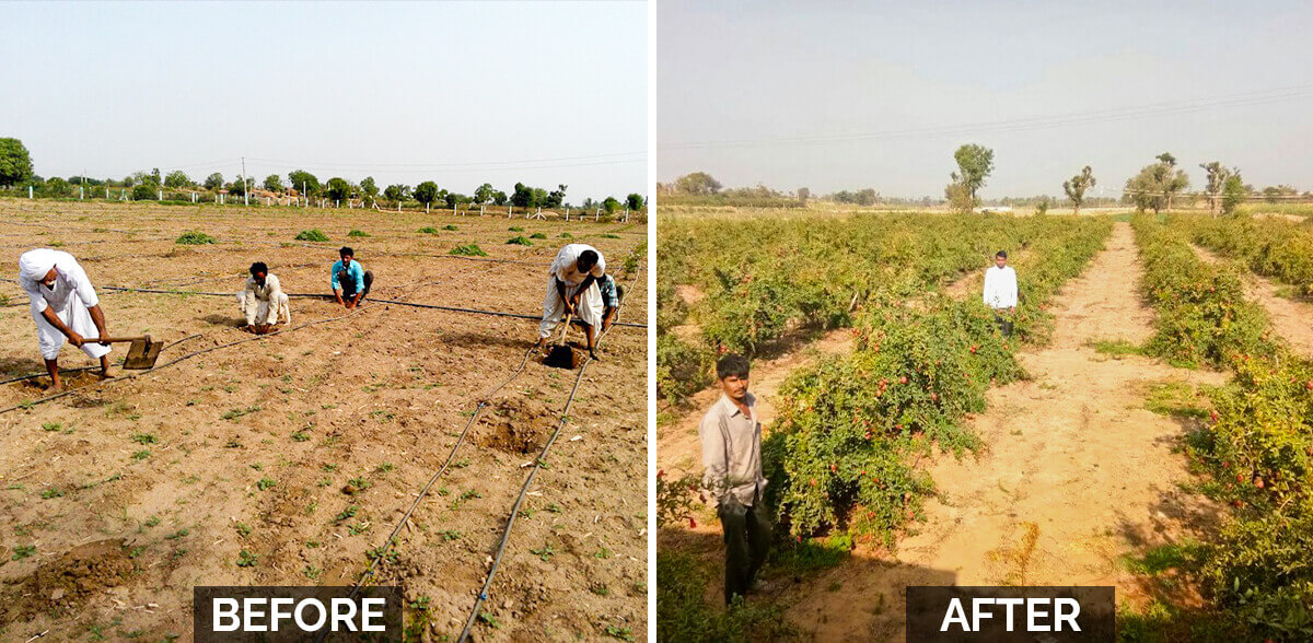 Delightful Farm Transformation