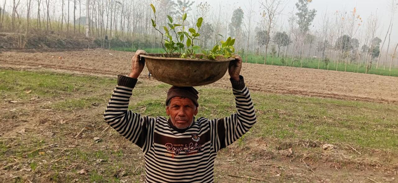 Plant a Life!