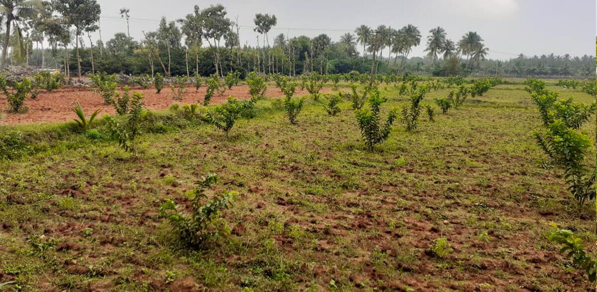 Rural Livelihood Plantation Program