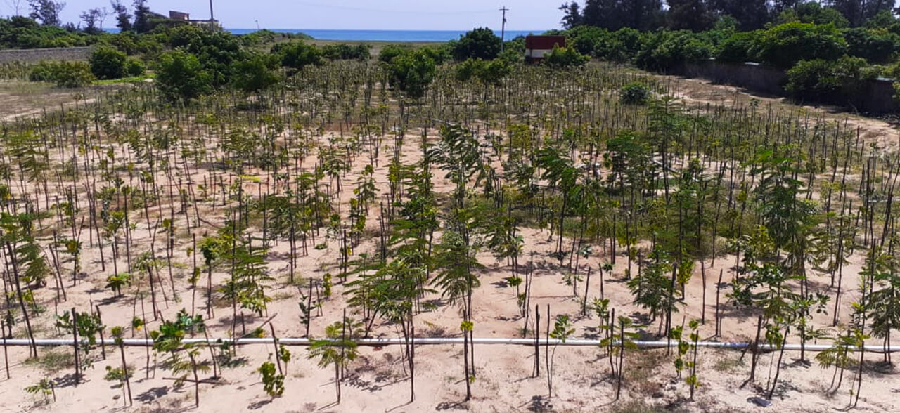 Supporting Small Saplings