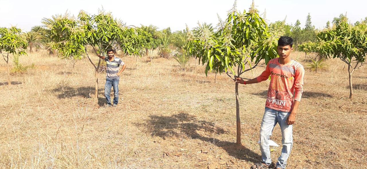 Agroforestry Tree Plantations