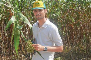 agriculture and farming hara chara jwaar pashuon ke liye faydemand
