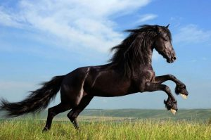 Black or white Punjab breeder sold horse with dyed coat for 18 lakh