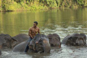 bollywood junglee movie teaser launch