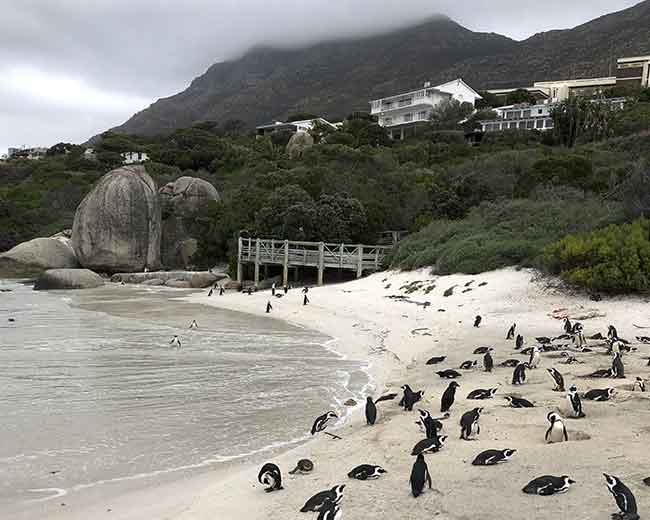 Beautiful Boulders Beach