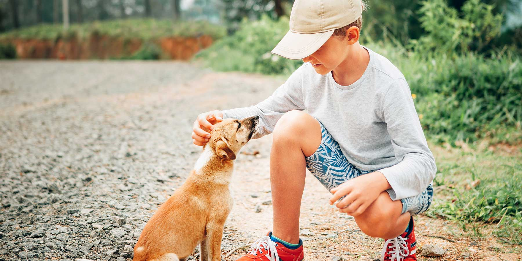 Showing Kindness towards Animals