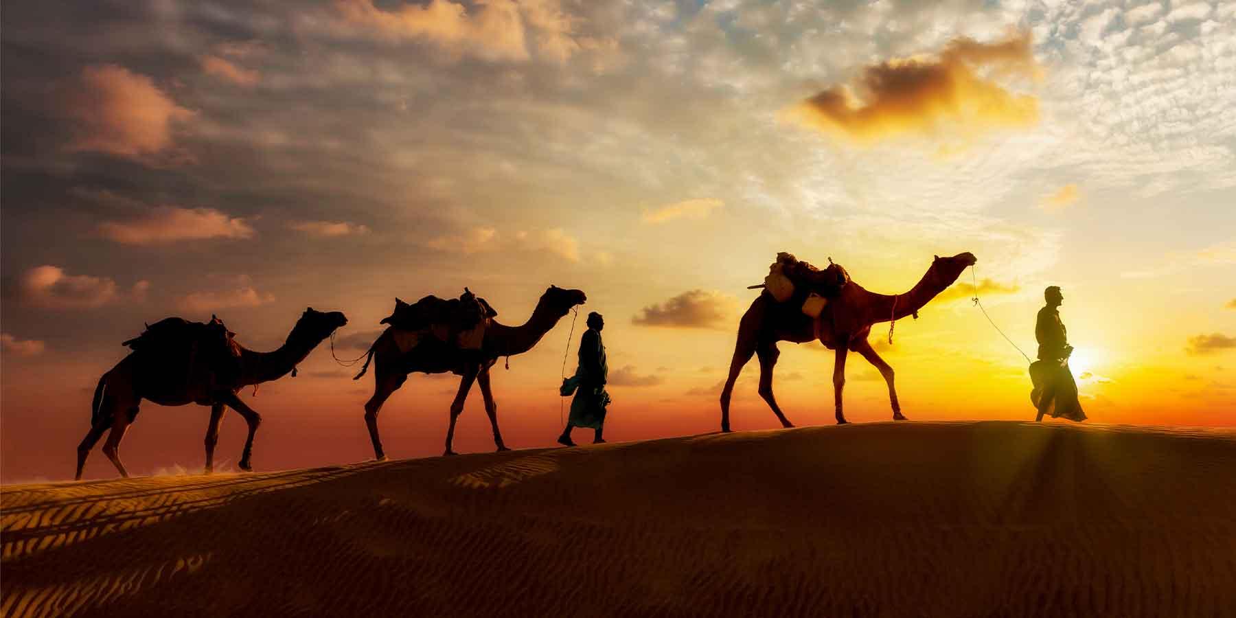 camel karma book