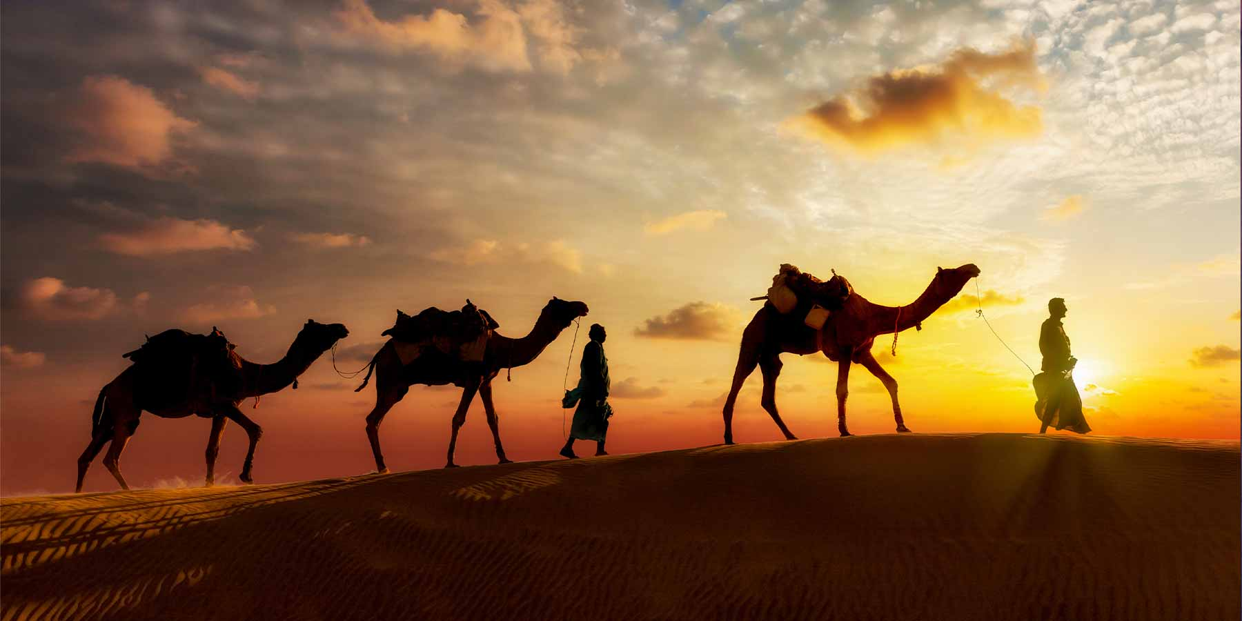 love for camels
