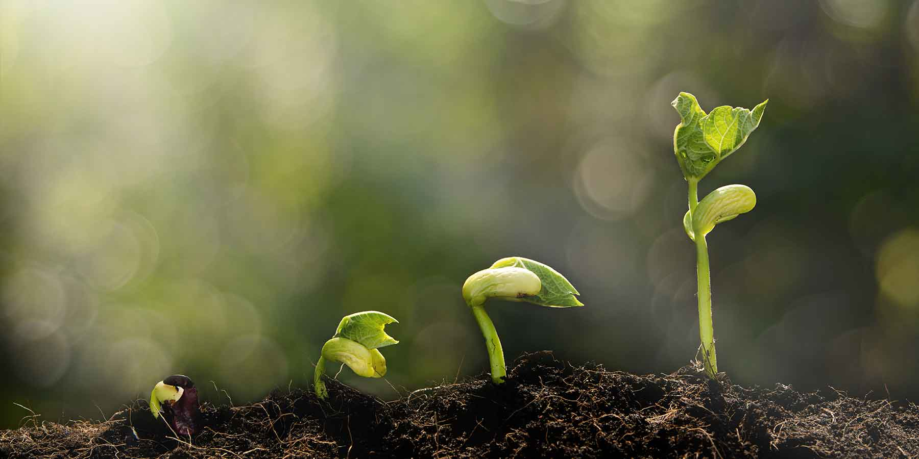Roots to the seed