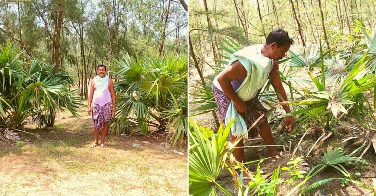 After Odisha Cyclone, Retired Jawan Spends Pension Money to Plant 50,000 Saplings