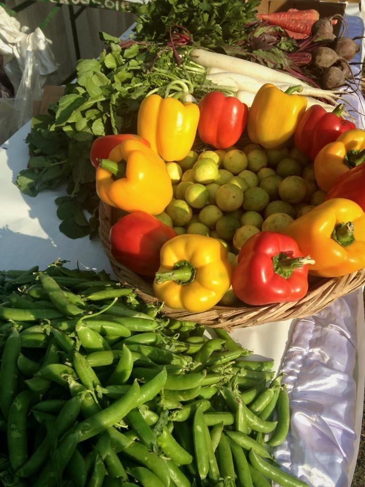 Residentes do Gurugram estão ajudando agricultores orgânicos a trazer produtos para você 5