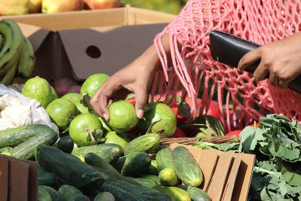 Residentes do Gurugram estão ajudando agricultores orgânicos a trazer produtos para você 6
