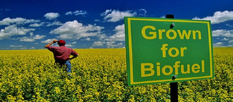 Why is bio fuel not being encouraged the most?, What is benefits of bio fuel?, What is JATROPHA?