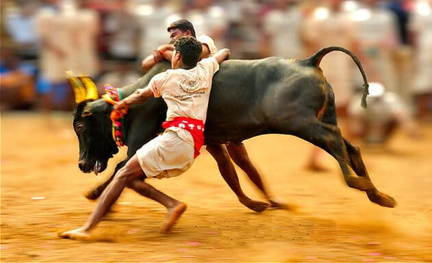 Supreme Court puts stay on the revival of Jallikattu in Tamil Nadu